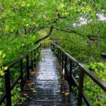 hutan mangrove dan pantai karangsong indramayu